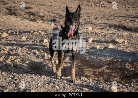 Kletterausrüstung Für Hunde : Wüste hund ausbildung stockfoto bild: 165832725 alamy