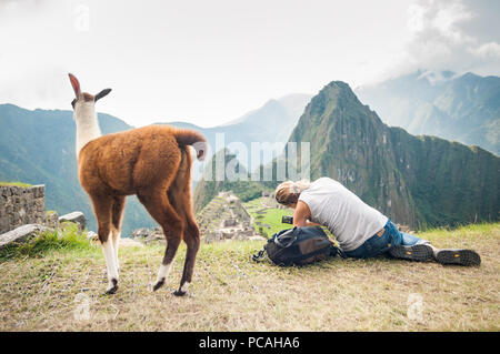 Frau Wanderer auf der Klippe eine Fotografie, ahnungslos von einem jungen Llama hinter ihr. Mit Blick auf die Ruinen der alten Stadt von Machu Picchu, Peru. - Stockfoto
