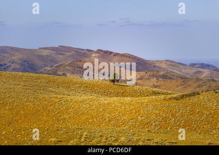 Einsamer Baum wachsen auf malerischen Hügeln gelb - Stockfoto