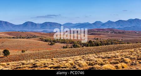 Panoramablick auf die Landschaft der spärlichen Vegetation auf orange Rolling Hills in Flinders Ranges, South Australia - Stockfoto
