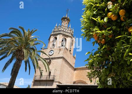 Palm Tree und Turm der Iglesia de Santa Maria la Mayor, Ronda, Andalusien, Spanien, Europa - Stockfoto