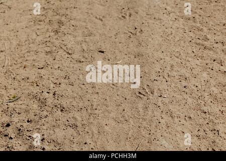 Vogel Abdrücke und Spuren auf einer trockenen Schotter- und Feldweg, Townsville, Queensland, Australien - Stockfoto