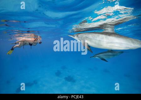 Die gegenseitige Neugier - Frau in einer Maske und Flossen sieht bei den Delphinen und den Frauen auf eine Frau. Spinner Delfine (Stenella longirostris) - Stockfoto
