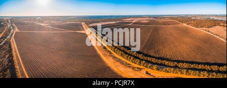 Malerische Weinberge in Kingston on Murray, Riverland, South Australia-wide Antenne panorama - Stockfoto