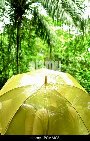 Panama City, Panama, Panama. 16. Mai 2009. Wecken zu einem tropischen Chor der motmots, Tukane, und fruitcrows. Ihr Schlafzimmer ist in der baumkrone Ebene, nicht mehr als 40 Meter von der Vögel. In den kühlen Panamaschen Dawn, die Sie fühlen können Panama? ist toll Regenwald um Sie erwachen. Blau und Grün Shrike-Vireos Cotingas, Vögel normalerweise in den Wipfeln der Bäume hohe glimpsed, Barsch direkt vor Ihrer Canopy Tower Zimmer. Bis eine Treppe im Speisesaal, eine Tasse Kaffee und Brötchen erwarten Sie. An einem Tisch niederlassen, neben dem Fenster. Über der endlosen tropischen Wald von Soberani? ein Nationalpark, ein Schiff - Stockfoto