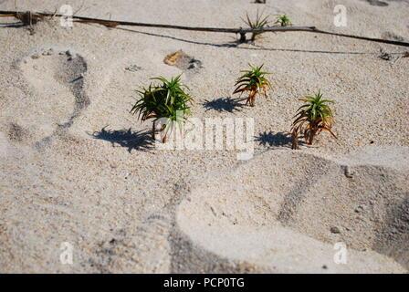 Kleine Welt. Surreale 3d. Ocean Shore leben. Strand Aktivität miniatur Form. Landschaft und Leute in Miniatur Form dargestellt - Stockfoto