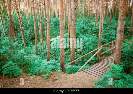 Der hölzerne Weg durch einen grünen Wald führt. Blick auf touristische Holz weg zwischen Bäumen und Gras. Russische Natur. - Stockfoto
