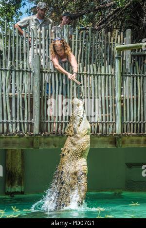 Frau Fütterung Maximo, einem 1250 Pfund Salzwasser Krokodil über 15 Fuß lang, wie es Sprünge aus dem Wasser bei St. Augustine Alligator Farm Tierpark. - Stockfoto