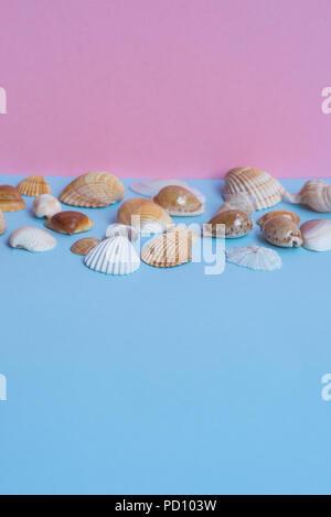 Verschiedene Muscheln auf einem hellen Blau und Rosa Hintergrund mit unterschiedlichen Ansichten und viele Copyspace. Minimalistisches Bild, das Erfassen der Geist der Sommer. - Stockfoto