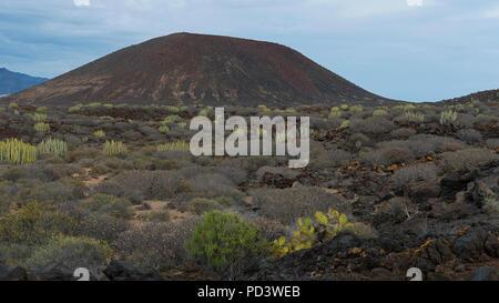 Blick auf den repräsentativsten Vulkankegel in endemischen Flora in der besonderen Natur Reserve von Malpais de la Rasca, Palm-Mar, Teneriffa abgedeckt - Stockfoto