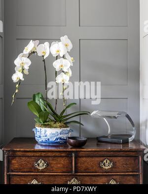 Weiße Orchideen und 60er Jahren italienische Oluce Columbo 281 Lampe an eine antike Truhe - Stockfoto