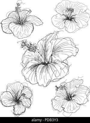 Hibiskus Blume. Hand gezeichnete Skizze. Vector Illustration auf ...