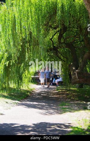 Spaziergang im Park unter einem Weeping Willow Tree. Die byers Riverside Park, Sidmouth, East Devon, Großbritannien. August, 2018. - Stockfoto
