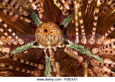 Ein bunten tropischen Riff - Stockfoto