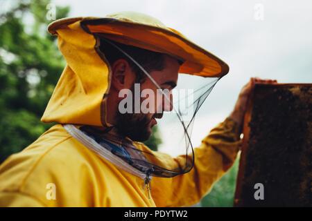 Bärtige Imker Inspektion seiner Imkerei in der Natur - Stockfoto