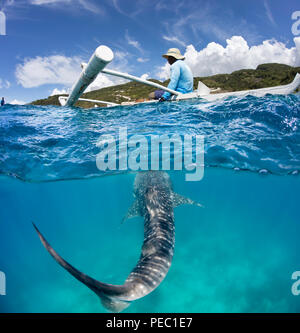 Eine kommerzielle Whale Shark Begegnung mit einem Abzweig oben auf ein Kanu und ein Walhai, Rhiniodon Typus, unten, Oslob, Philippinen. Dieses ist die Welten la - Stockfoto