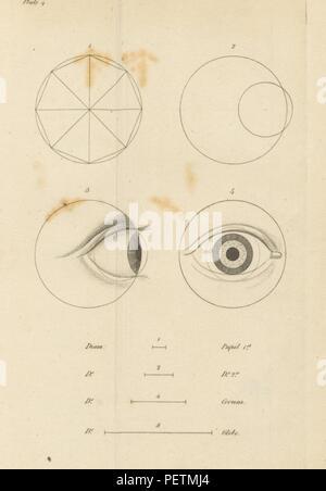 Homographia; ein Essay über die Proportionen des Menschen Körper ...