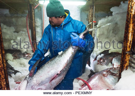 Decksmann verschieben Fisch im Gefrierschrank auf Fischerboot, San Diego, Kalifornien, USA - Stockfoto
