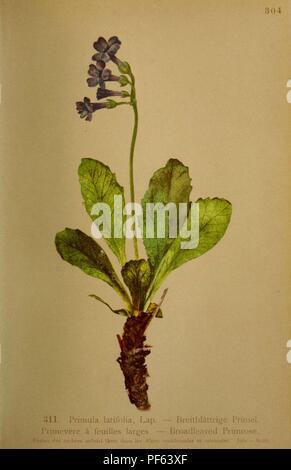 Atlas De La Flora alpine (pl. 311)