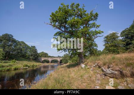 Barden Brücke in der Nähe von Bolton Abbey in Yorkshire. - Stockfoto