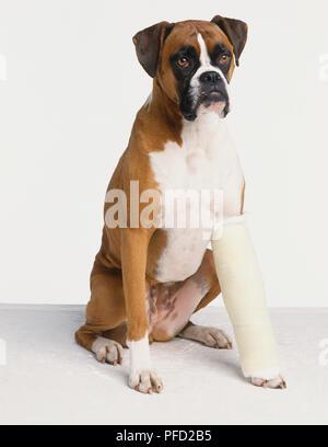 Bein in Gips Stockfoto, Bild: 225369419 - Alamy