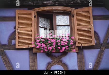 Frankreich, Elsass, rosa Blumen auf einem fensterläden Fensterbänke, Low Angle View. - Stockfoto