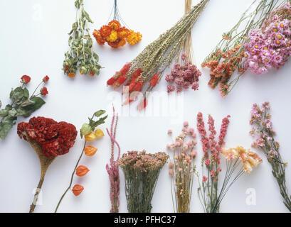 Auswahl von getrockneten Blumen - Stockfoto