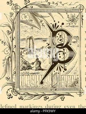 """. Cyclopedia von praktische Blumenzucht. Blumenkultur ; Blume Sprache. (Jultupp? fltiorih"""" JPIanh* ELONGING der Malve Familie, der Abutilons sind häufig Erdbeere - Glocken aufgrund einer Ähnlichkeit zwischen die Blumen der einige der früheren Ari (Krawatten und der gemeinsamen Erdbeeren genannt. Sie sind auch scimctimes genannt Blüte Ahorn, von einer Ähnlichkeit m die Form der Blätter, die denen der Ahorn. Die Blätter arc wunderbar in Farbe und Abzeichen abwechslungsreich, Eing einer hellen Goldgelb in einigen Sorten, und JTitc gemischt mit Gelb in der Anderen, während einige wenige re Schön orname - Stockfoto"""