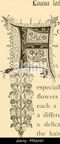 """. Cyclopedia von praktische Blumenzucht. Blumenkultur ; Blume Sprache. Â"""" 5? Goasa. Icitcritiu erfordern. Natürliche Ordnung: Loasacece â Loasa Familie. ORMING eine Klasse von Pflanzen, die von Selbst, der Loasas geben Ihren Namen in der Reihenfolge, in der die dort etwa 70 Arten entdeckt wurden; und diejenigen von besonderer Schönheit. Einige von ihnen lehnen sie ihre langen, verzweigten Stielen auf der Erde"""", wie die Goldene bartonia; andere, wie die loasa, wachsen zu einem^ größere Länge und haben mehr strebende Naturen, wodurch sie besonders gut für die Decke von spalieren, Dorne, oder Rock. ^ Blumen sind neugierig - Stockfoto"""