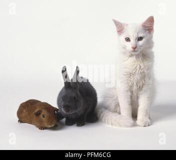 Ein weißes Kätzchen neben einem Kaninchen und einem gerbil - Stockfoto