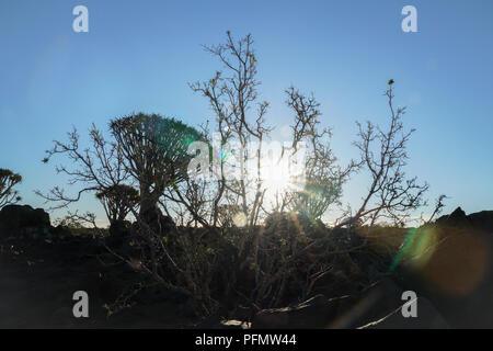 Sunburst am späten Nachmittag durch Bäume in Namibia Köcherbaumwald bei Keetmanshoop - Stockfoto