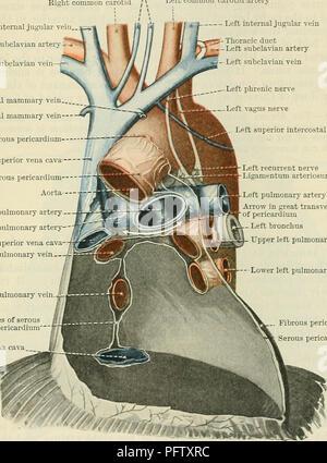 Cunninghams Lehrbuch der Anatomie. Anatomie. Die Lungen. 1093 der A ...