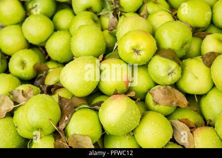 Hood River, Oregon, USA. Granny Smith Äpfel zum Verkauf an einem Obststand. - Stockfoto
