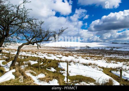 Divis und Black Mountain spaziergang Belfast Hügeln Schnee Nation Vertrauen Belfast Nordirland - Stockfoto