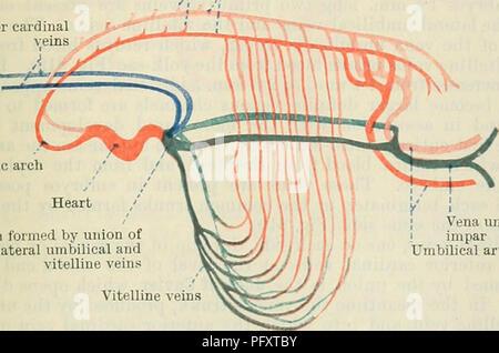 Cunninghams Lehrbuch der Anatomie. Anatomie. 818 Die SINNESORGANE ...