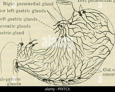 Cunninghams Lehrbuch der Anatomie. Anatomie. Die LYMPHDRÜSEN DES ...