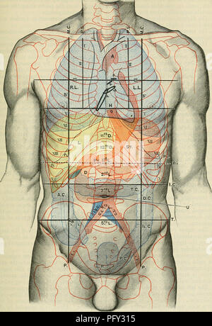 Cunninghams Lehrbuch der Anatomie. Anatomie. Pylorus Antrum pylori ...
