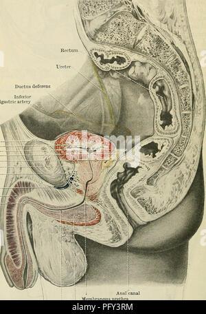 Cunninghams Lehrbuch der Anatomie. Anatomie. PERITONEUM. 1237 ...