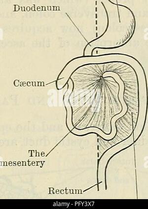 Cunninghams Lehrbuch der Anatomie. Anatomie. PEKITONEUM. 1235 Leber ...