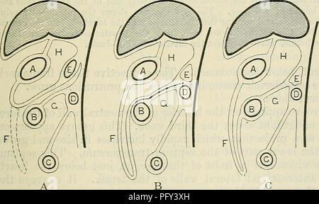 Hinteren Bauchwand Stockfoto, Bild: 7711069 - Alamy