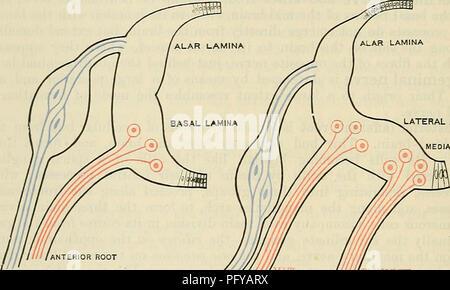 Cunninghams Lehrbuch der Anatomie. Anatomie. Auditive U-Retro ...