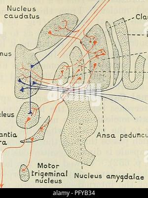 Cunninghams Lehrbuch der Anatomie. Anatomie. Interne STRUKTUR DER ...