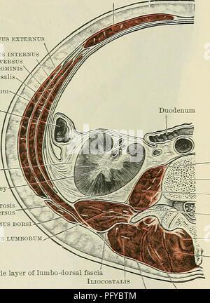 Leiste (Leiste) Anatomie Stockfoto, Bild: 39486416 - Alamy