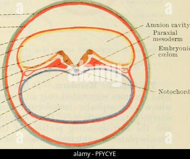 Cunninghams Lehrbuch der Anatomie. Anatomie. Trophoblast Der_chorion ...
