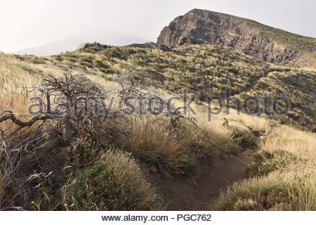 Ruta de la Cresteria Wanderweg durch die Caldera de Taburiente National Park. Zwerg Vegetation wächst in Höhenlagen von La Palma Kanarische Inseln Spanien - Stockfoto