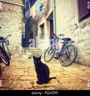 Rovinj, Kroatien - August 3, 2018: hübsche Katze auf Stein Schritte unter Vintage schönes Haus in der Altstadt von Rovinj, Kroatien. - Stockfoto