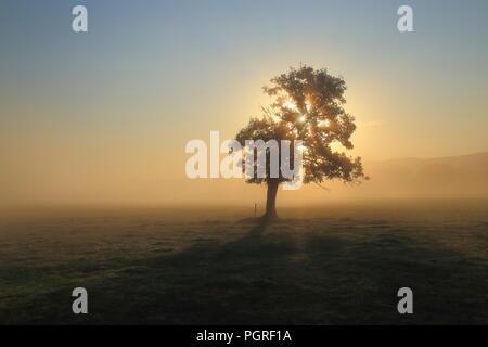 Sonnenstrahlen Sonnenlicht durch Baum an einem nebligen Morgen in Ax Tal in East Devon - Stockfoto