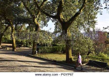 Mann zu Fuß durch Alameda Park am Morgen, Santiago de Compostela Galizien Spanien Europa. - Stockfoto