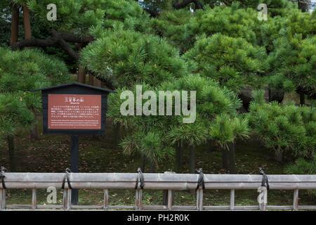 300 Jahre alte Kiefer namens '300 Jahre Pine' in der Hamarikyu Chuo, Tokio, Japan, 30. November 2017. () - Stockfoto
