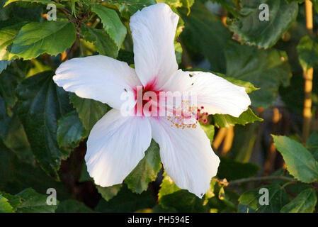 Schönes helles Pflanzen - Stockfoto